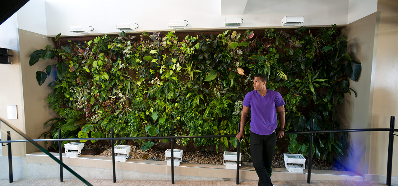 man looking at wall with plants