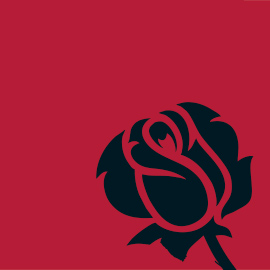 Vector image of a black rose on a red background.