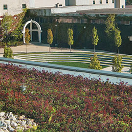 spotlight-sustainability_green_roof.jpg