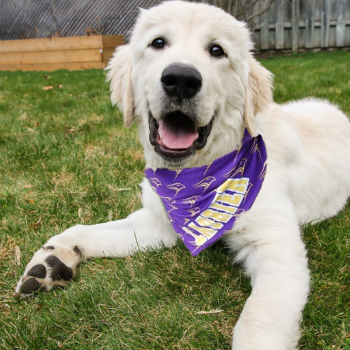 Laurier helping animals in need through new community partnership.